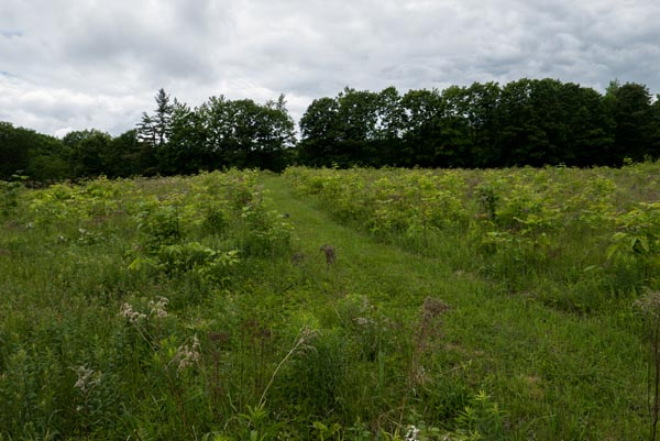 tom rush meadow path 1P1000467