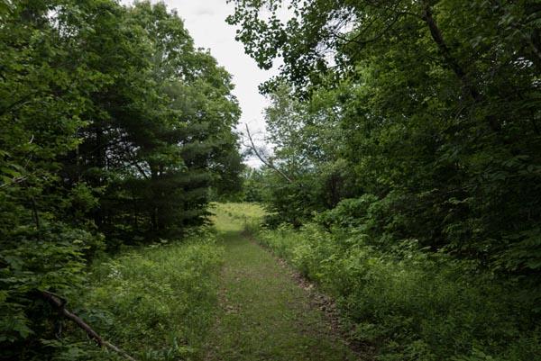 tom rush meadow path 2 P1000480
